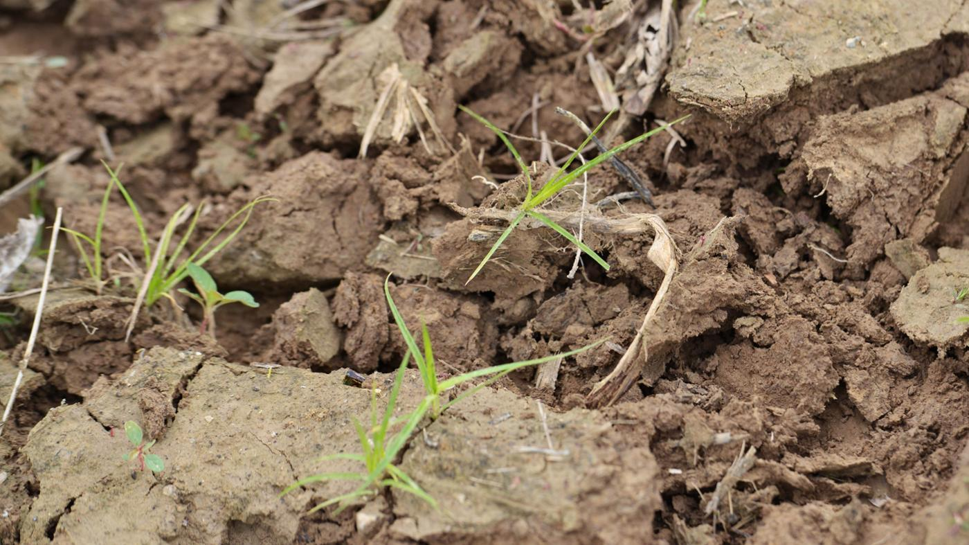 difference-between-soil-sand