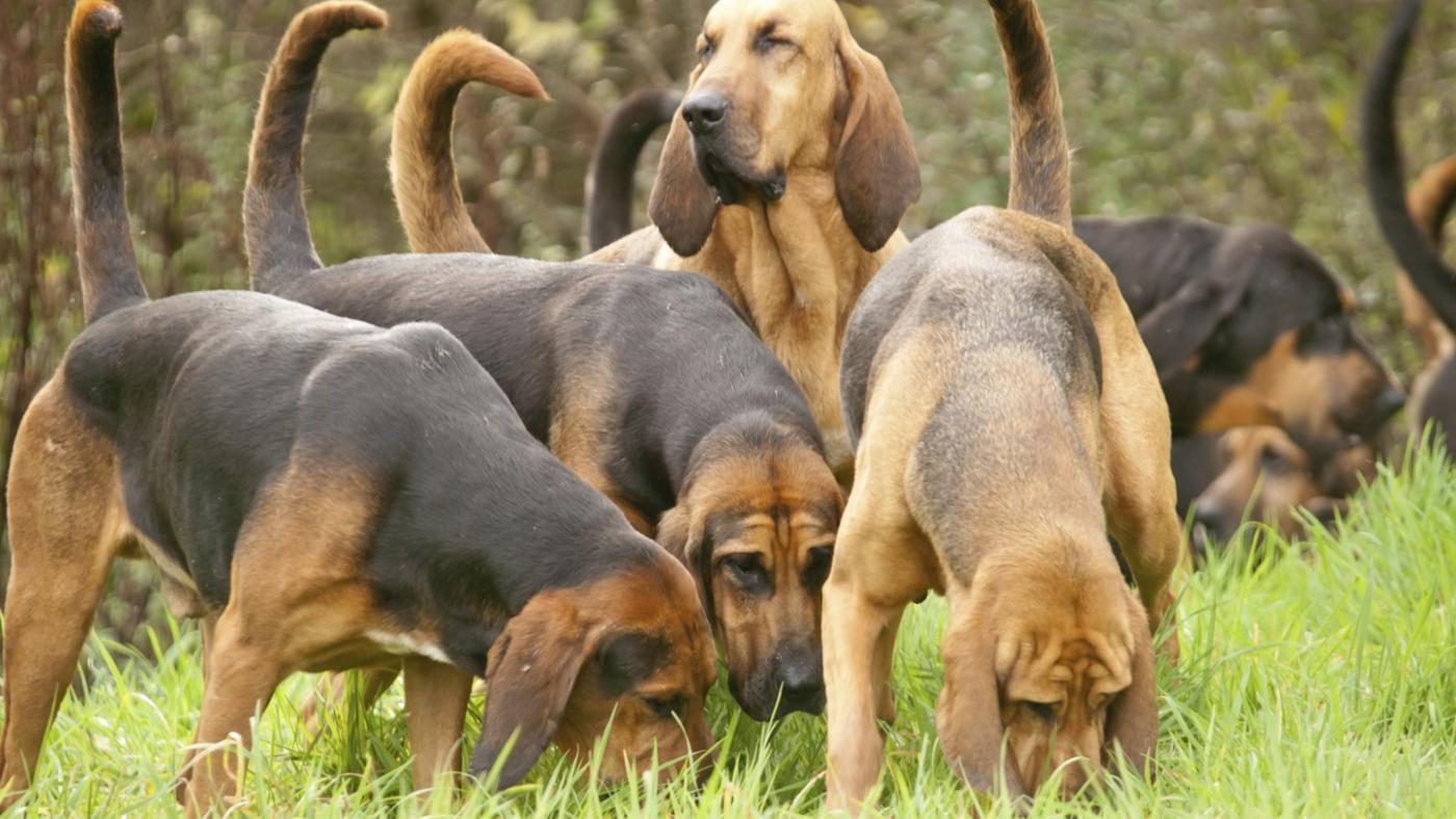 different-types-hound-dogs