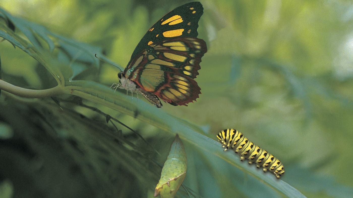 caterpillars-turn-butterflies