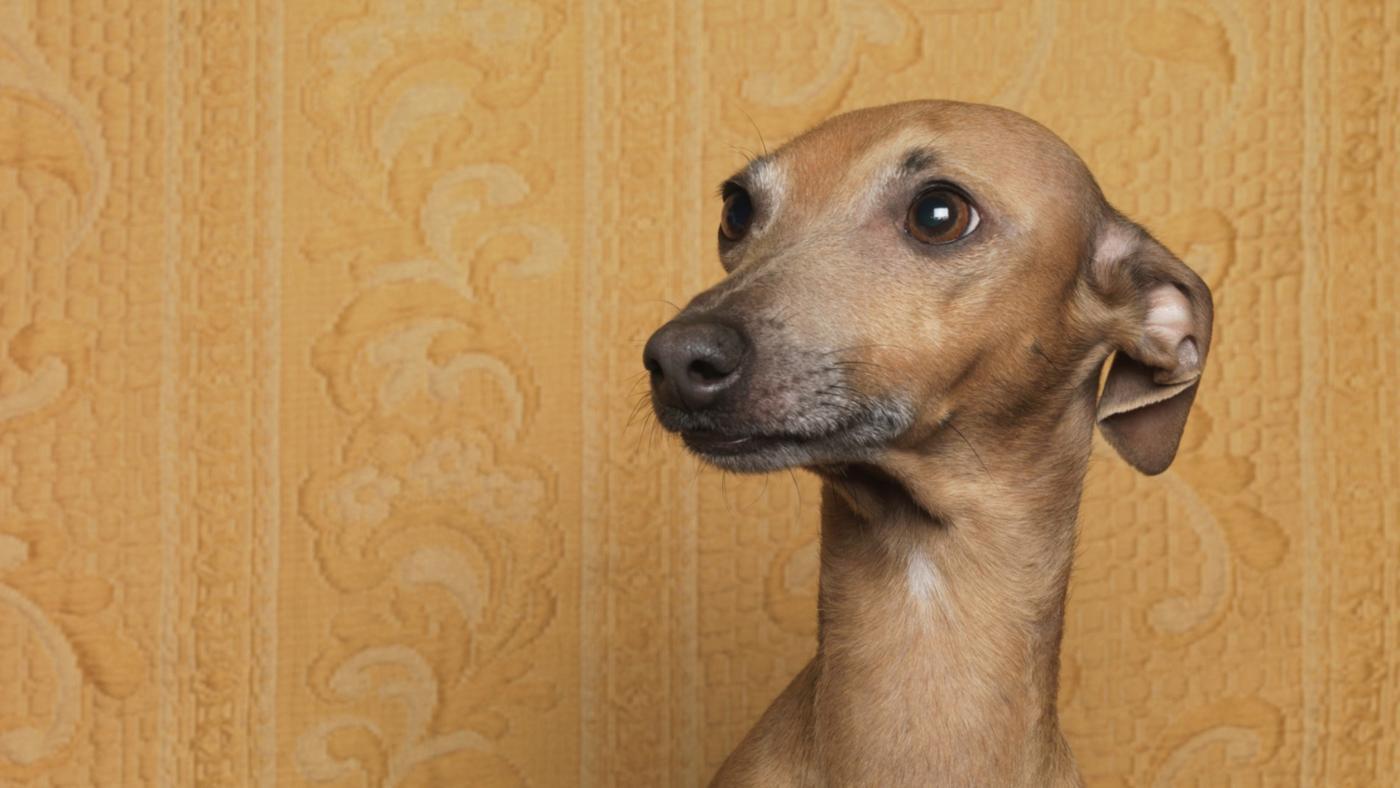 dogs-put-ears-back