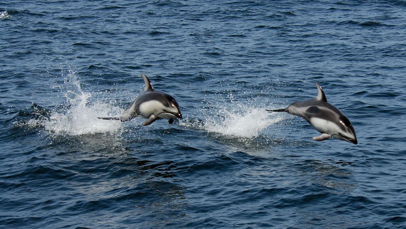 dolphin-carnivore-herbivore-omnivore