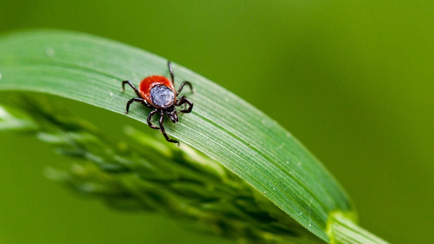 early-signs-lyme-disease