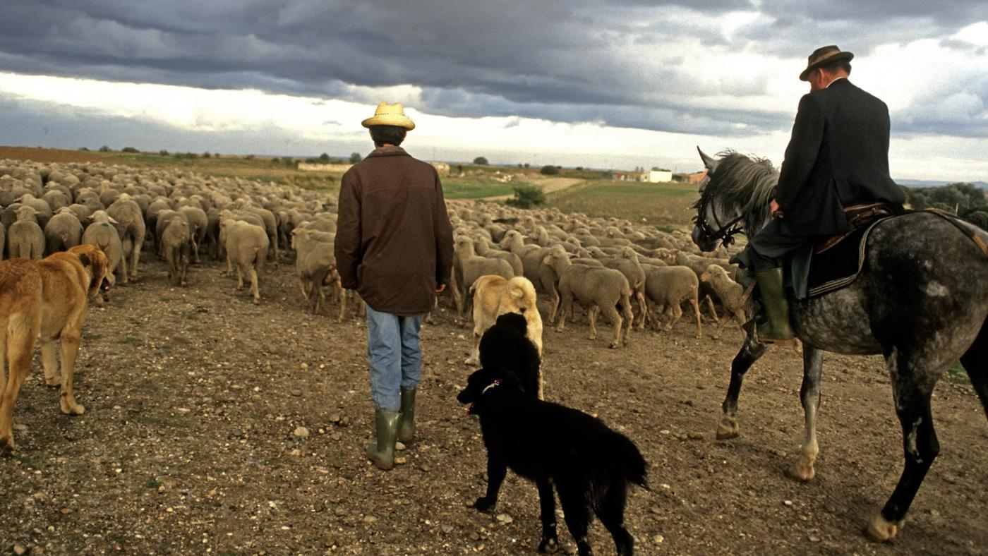 effects-rural-urban-migration