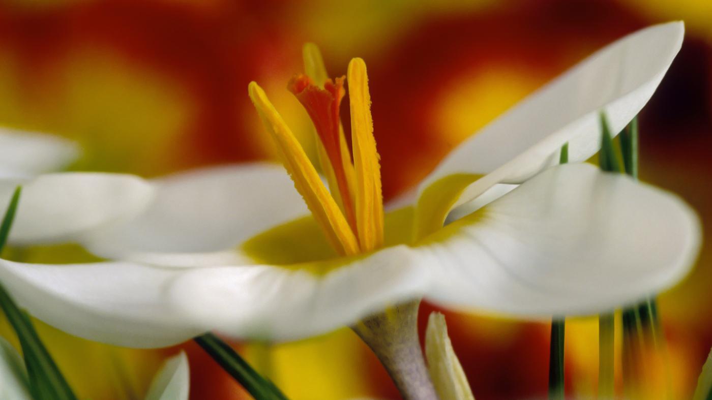 female-part-flower-called