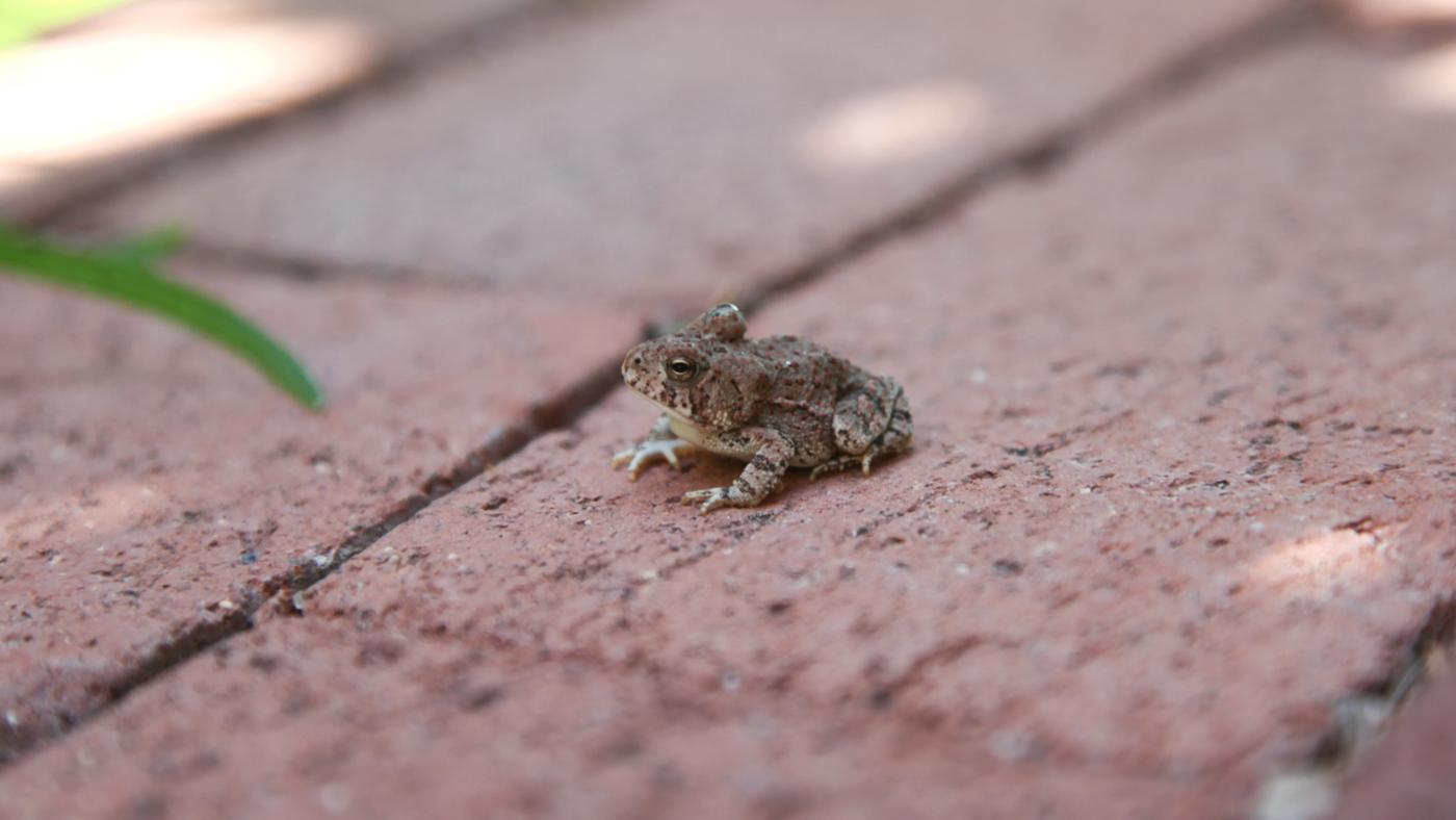 frogs-eat