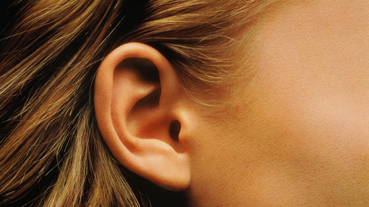 function-cochlea