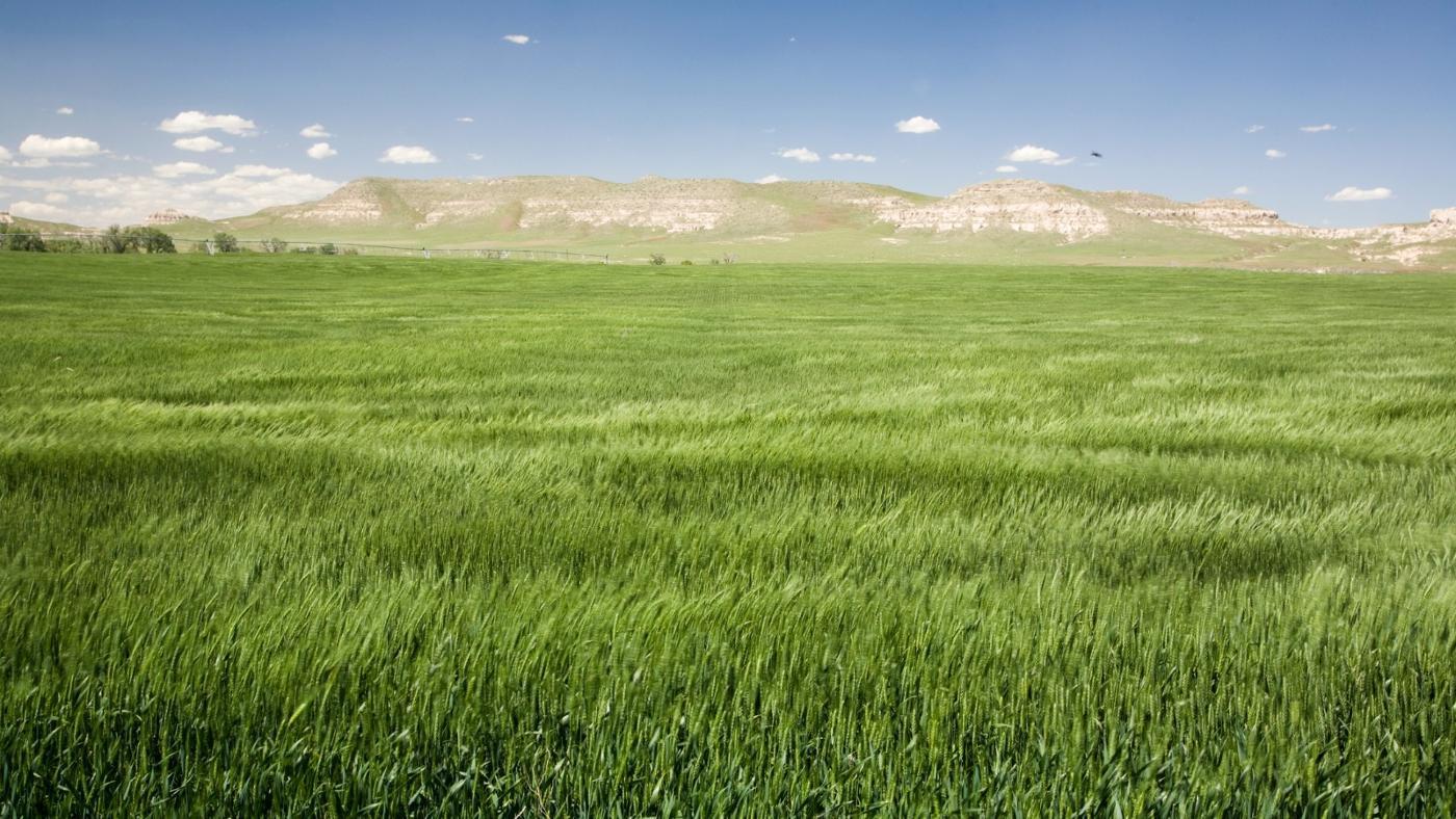 grassland-ecosystem