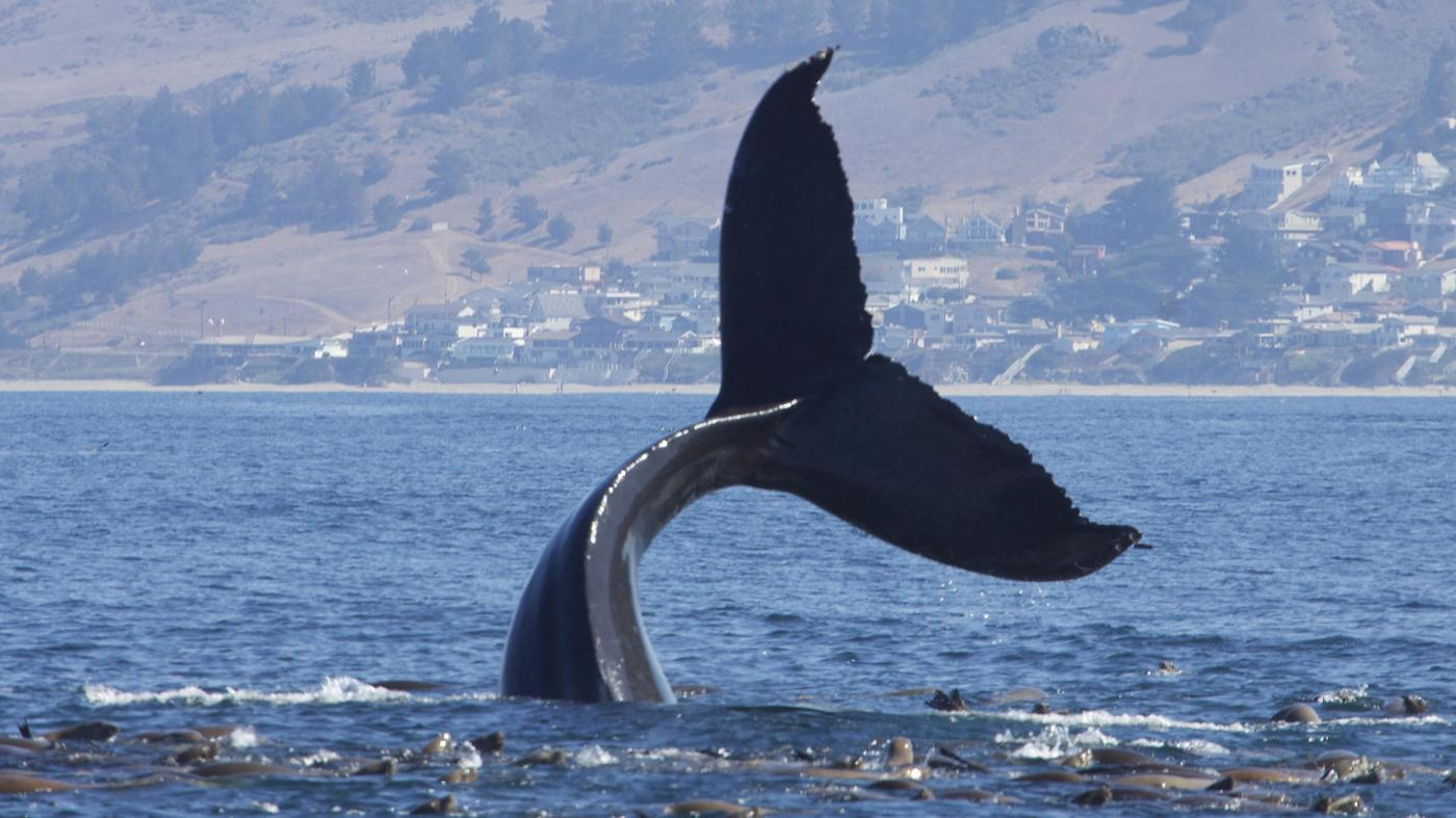 group-whales-called