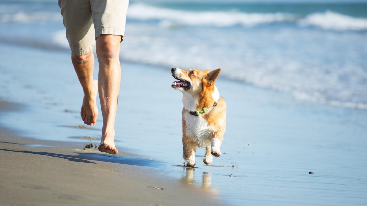 happens-dog-eats-sand
