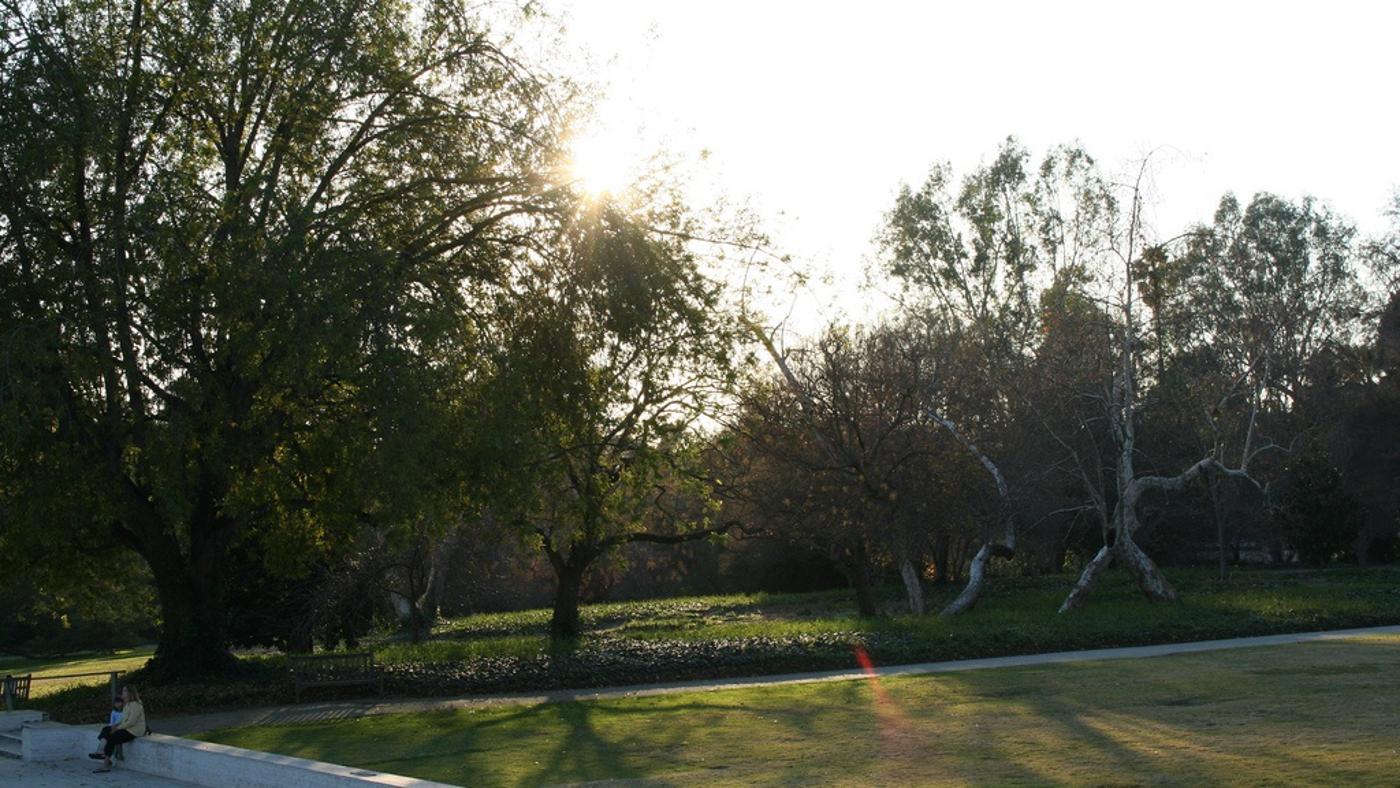 plants-absorb-carbon-dioxide