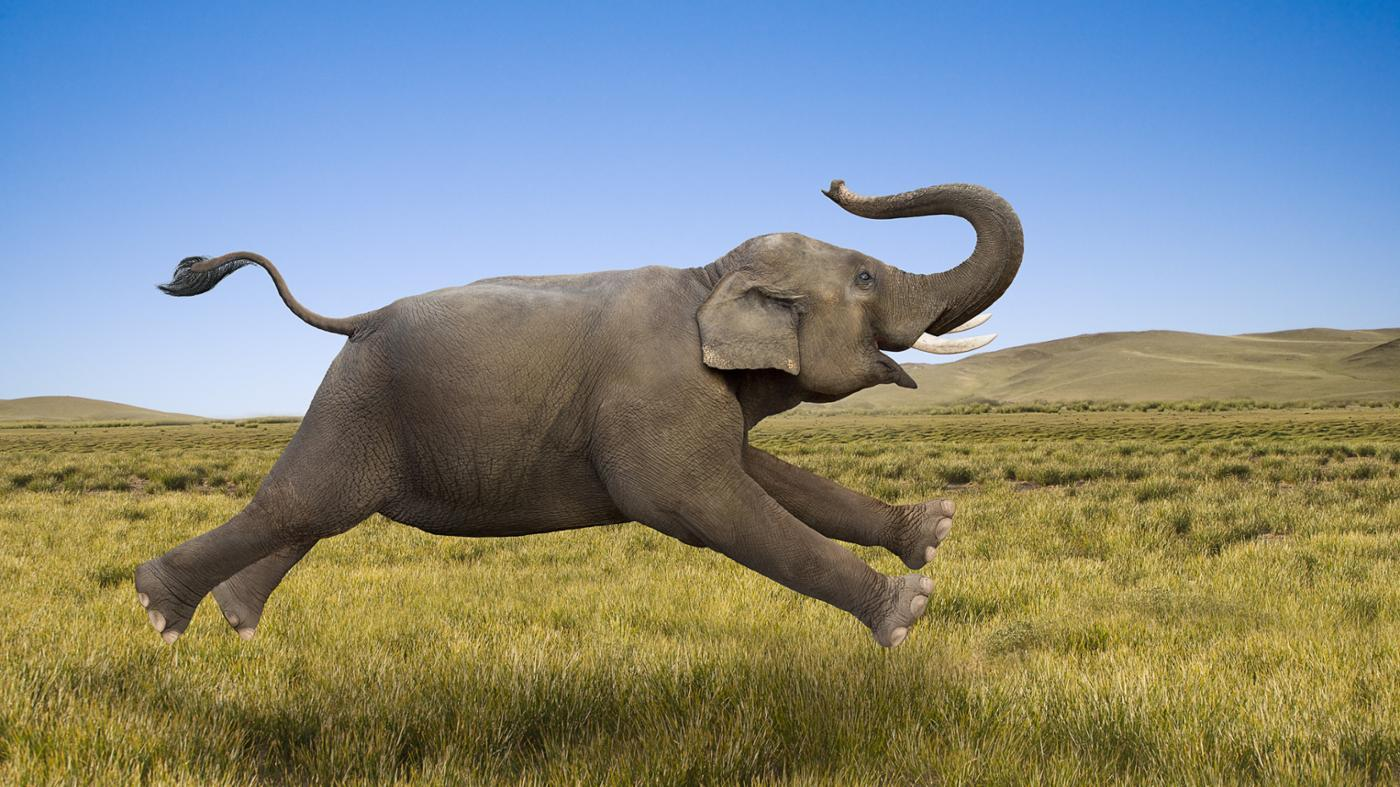 fast-can-elephant-run