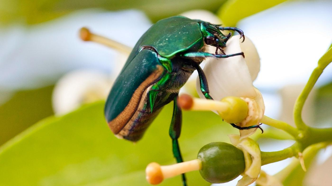 many-legs-beetle
