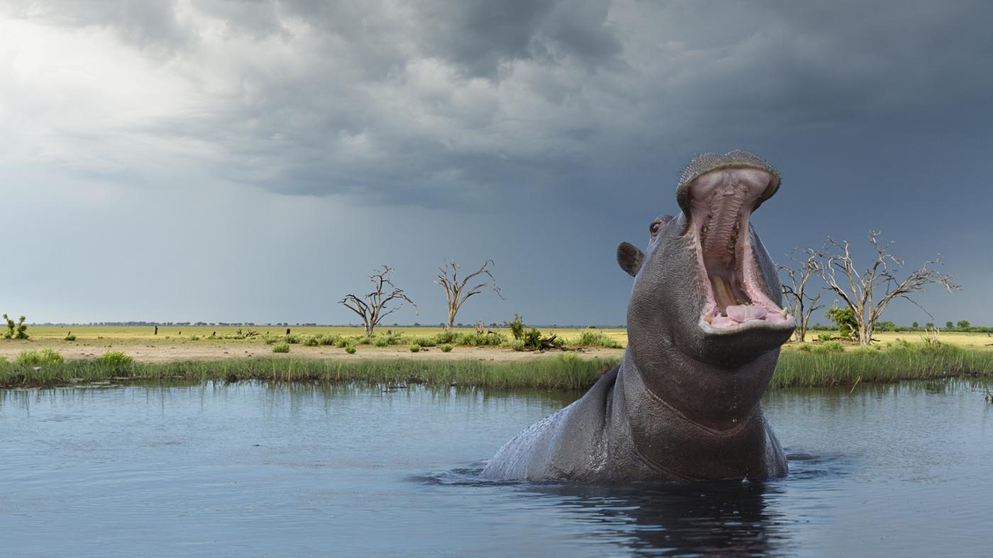 importance-animals-environment