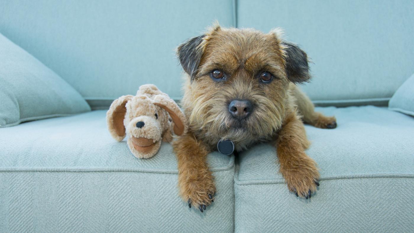 kind-dog-baxter-anchorman