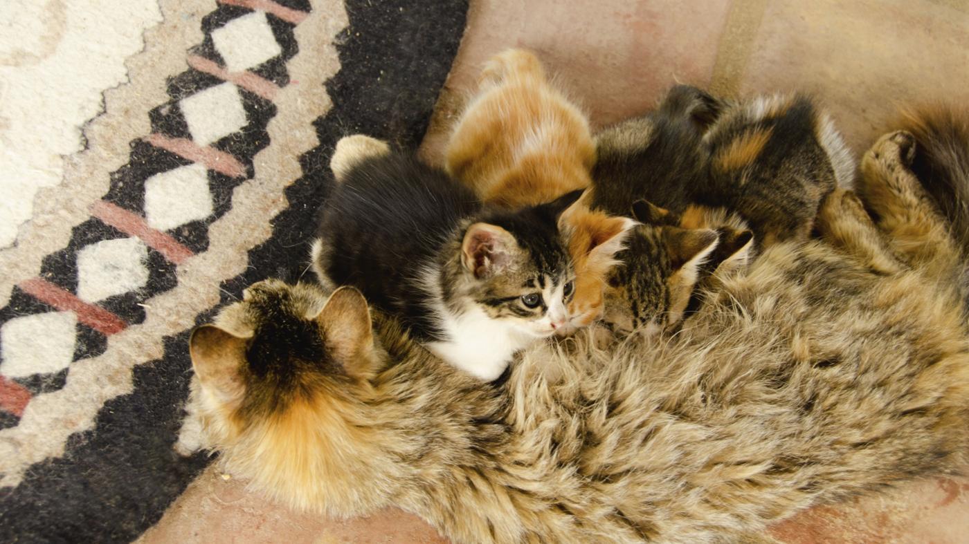 kittens-stop-nursing
