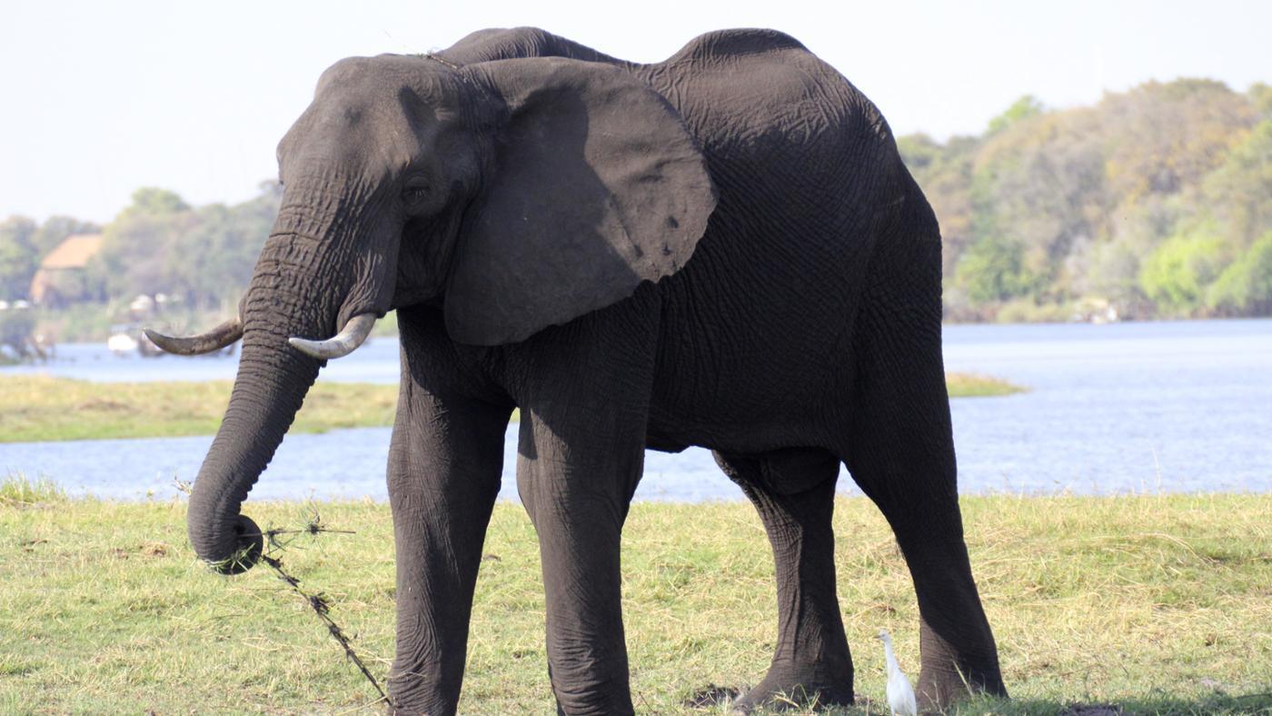 largest-animal-land