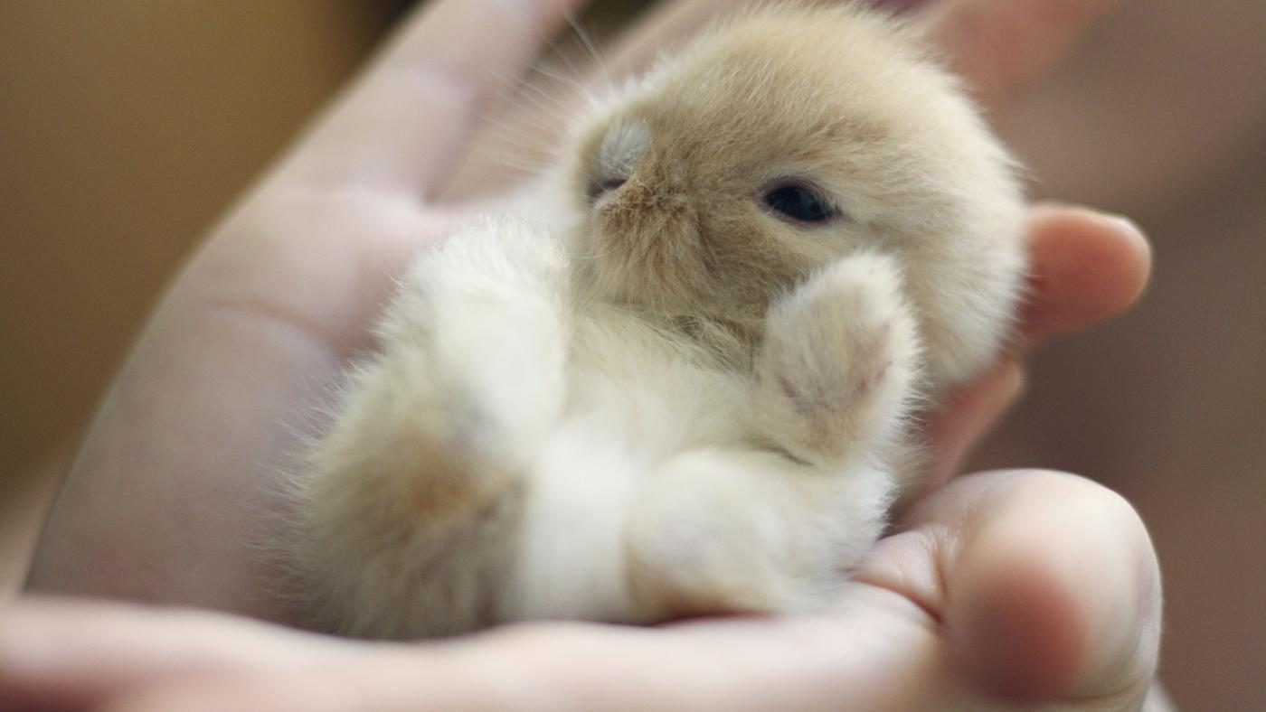 long-baby-rabbits-stay-mother