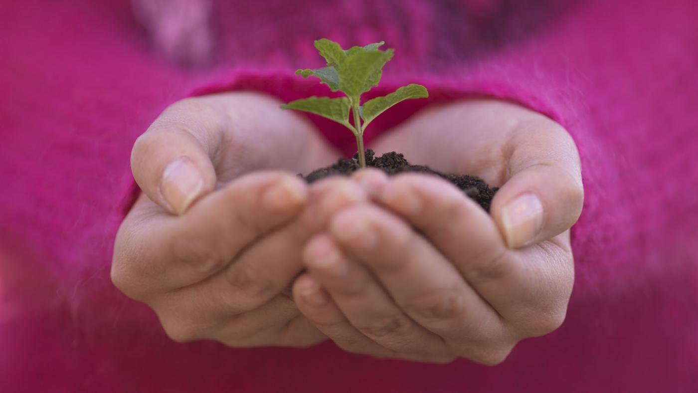long-grow-tree-saplings