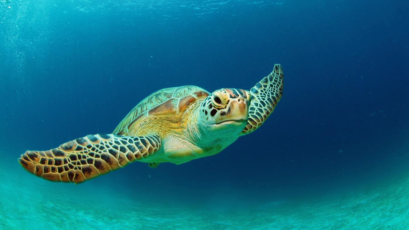 long-turtles-live