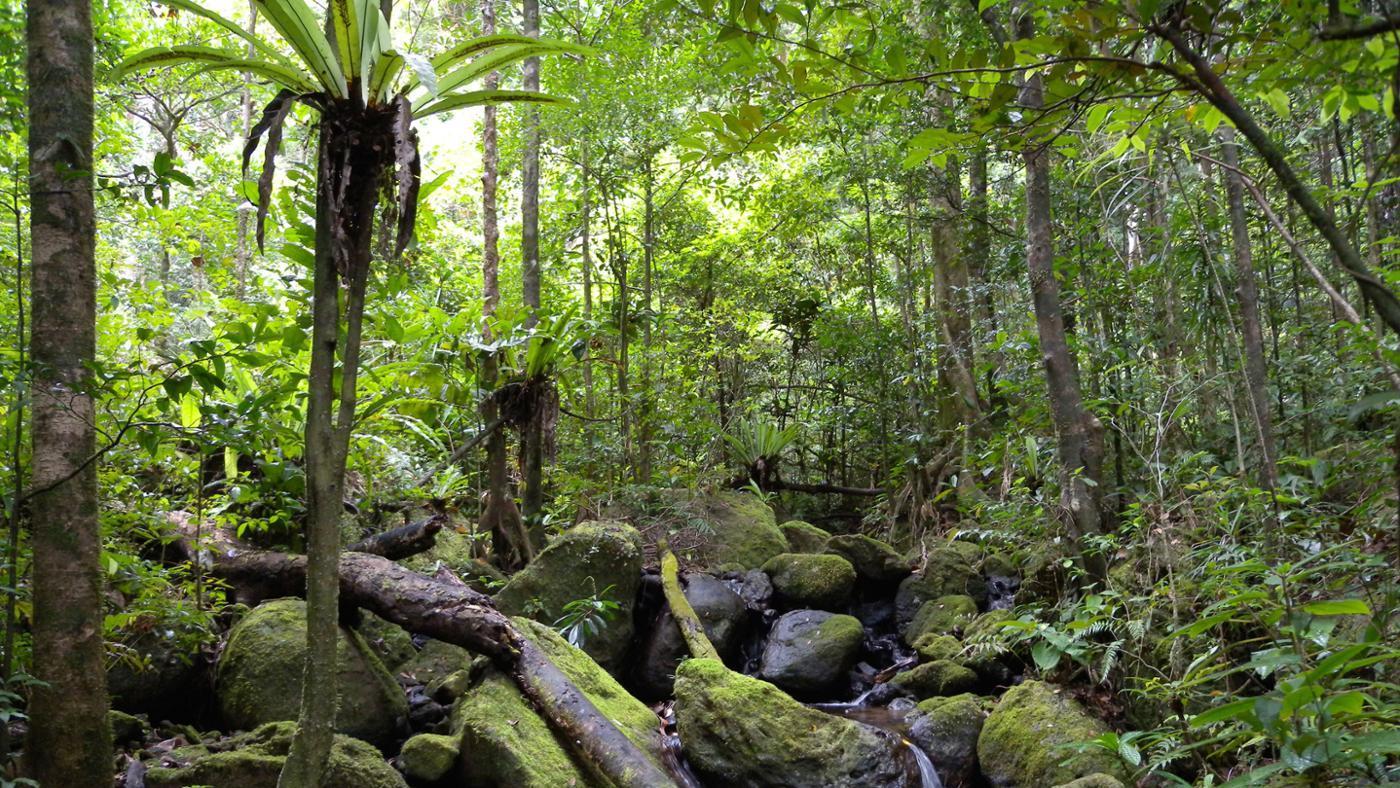 many-animal-species-live-rainforest