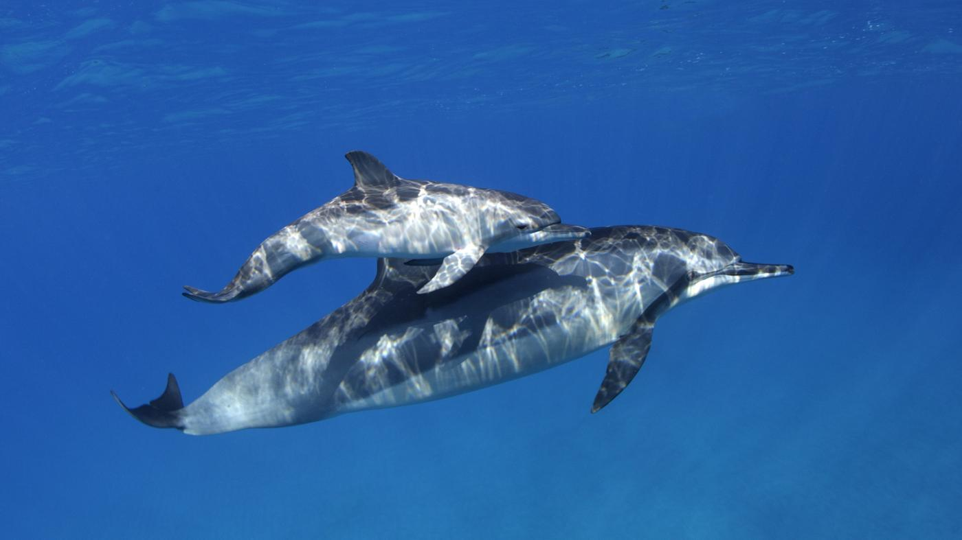 many-babies-dolphins