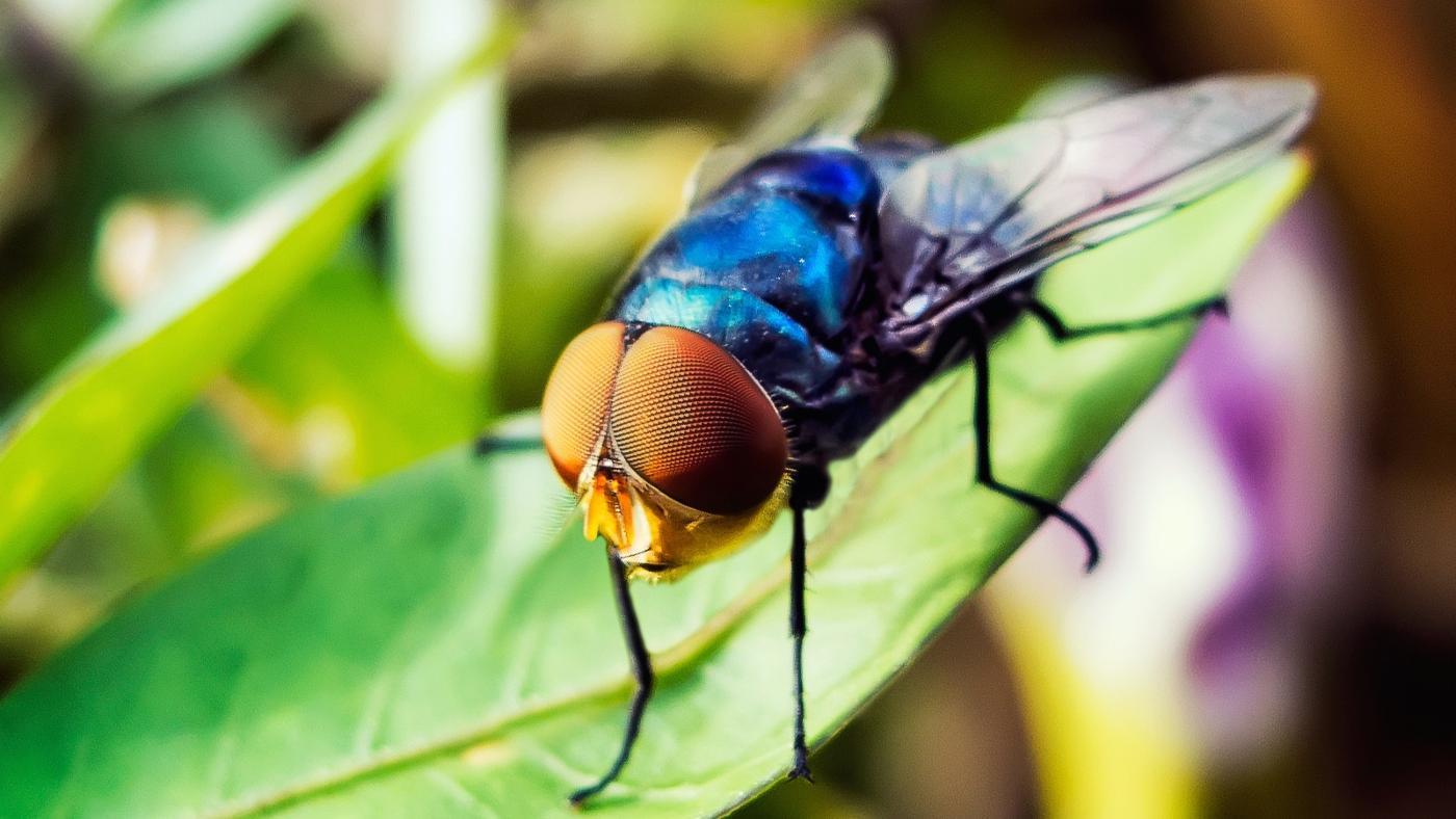 many-eyes-fly