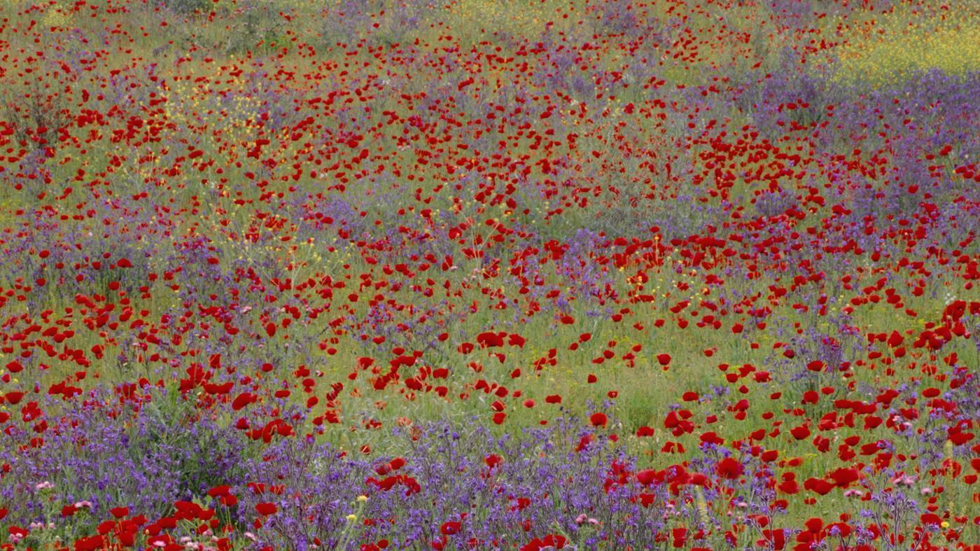 many-types-flowers-world