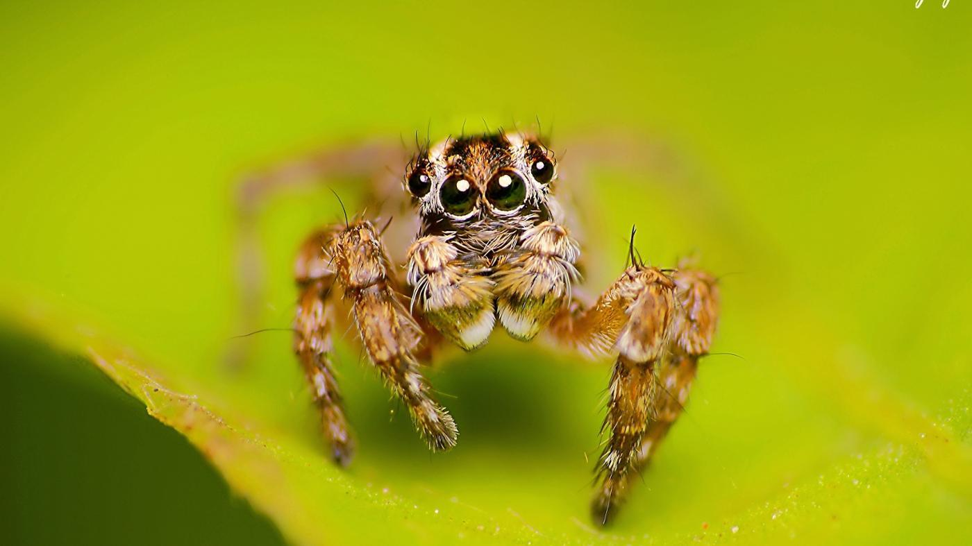 many-types-spiders