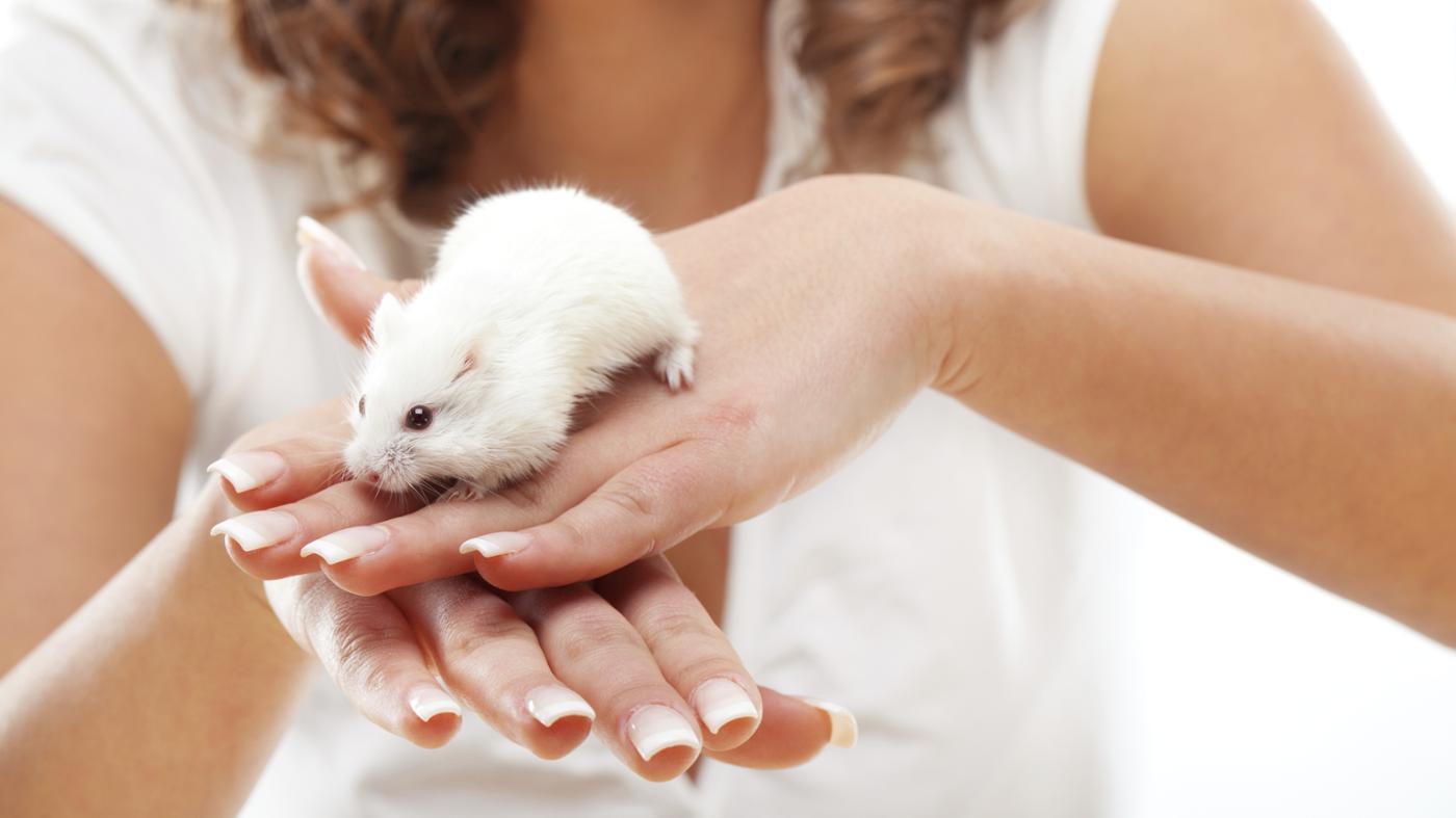 mice-bite-humans