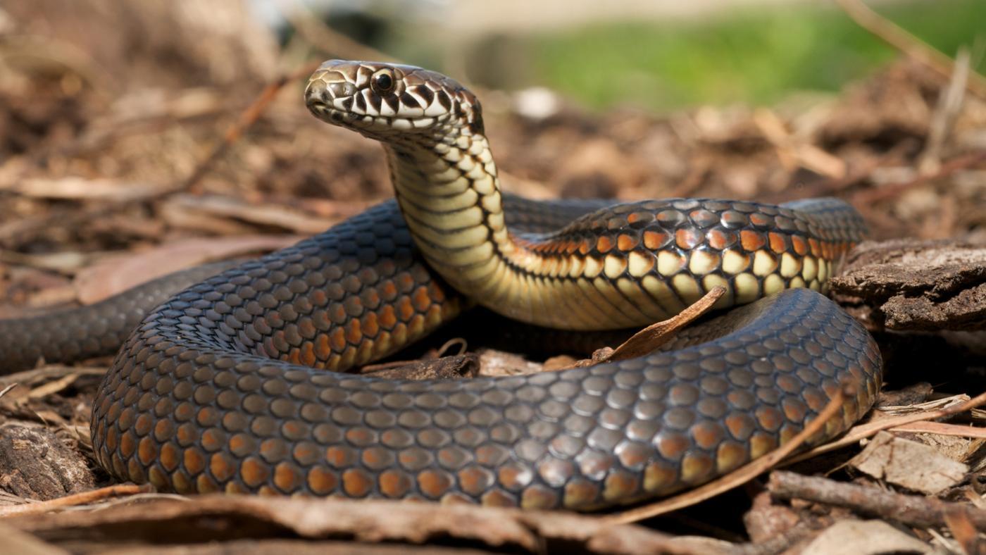moth-balls-keep-snakes-away
