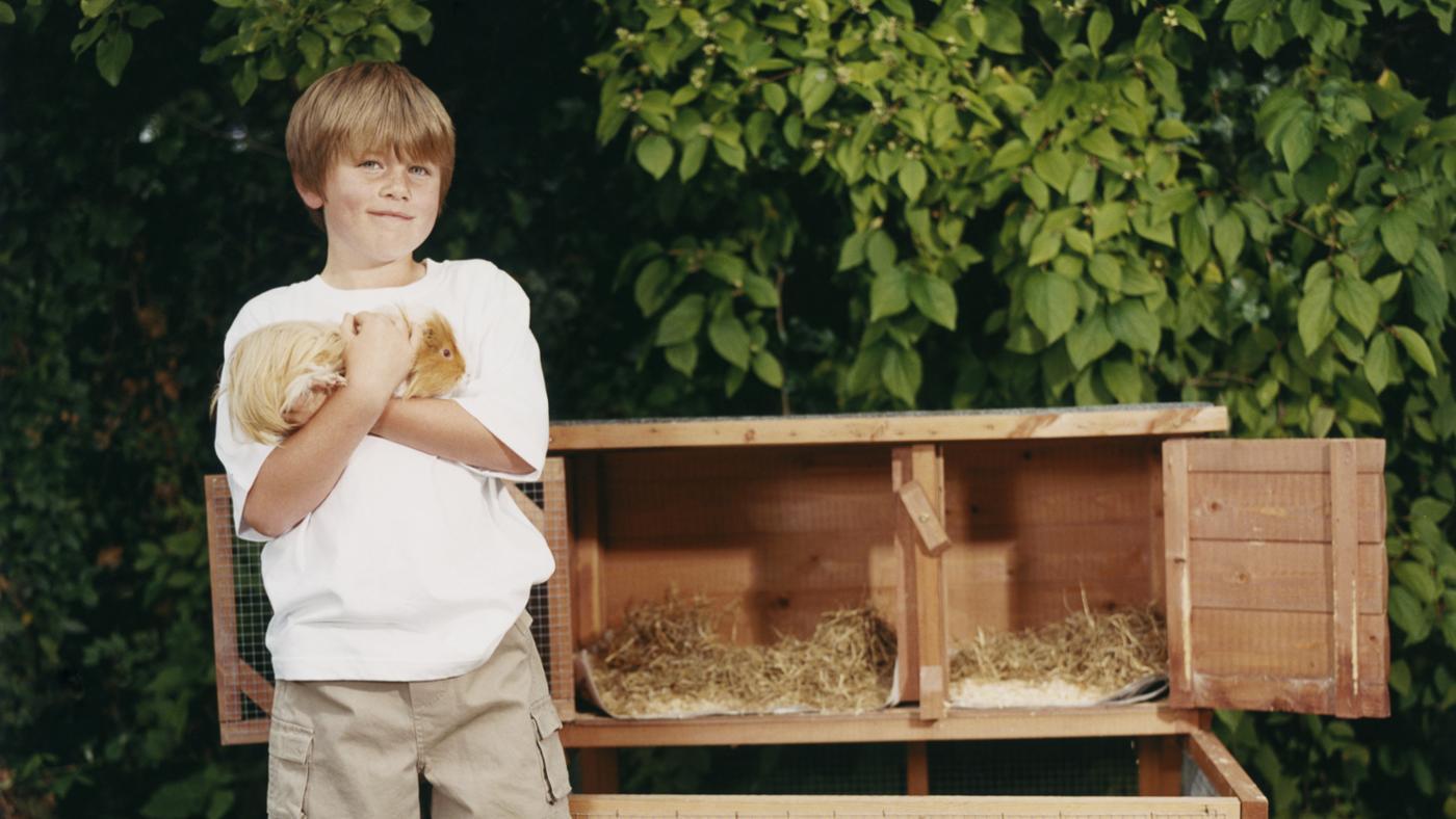 much-guinea-pig-poop