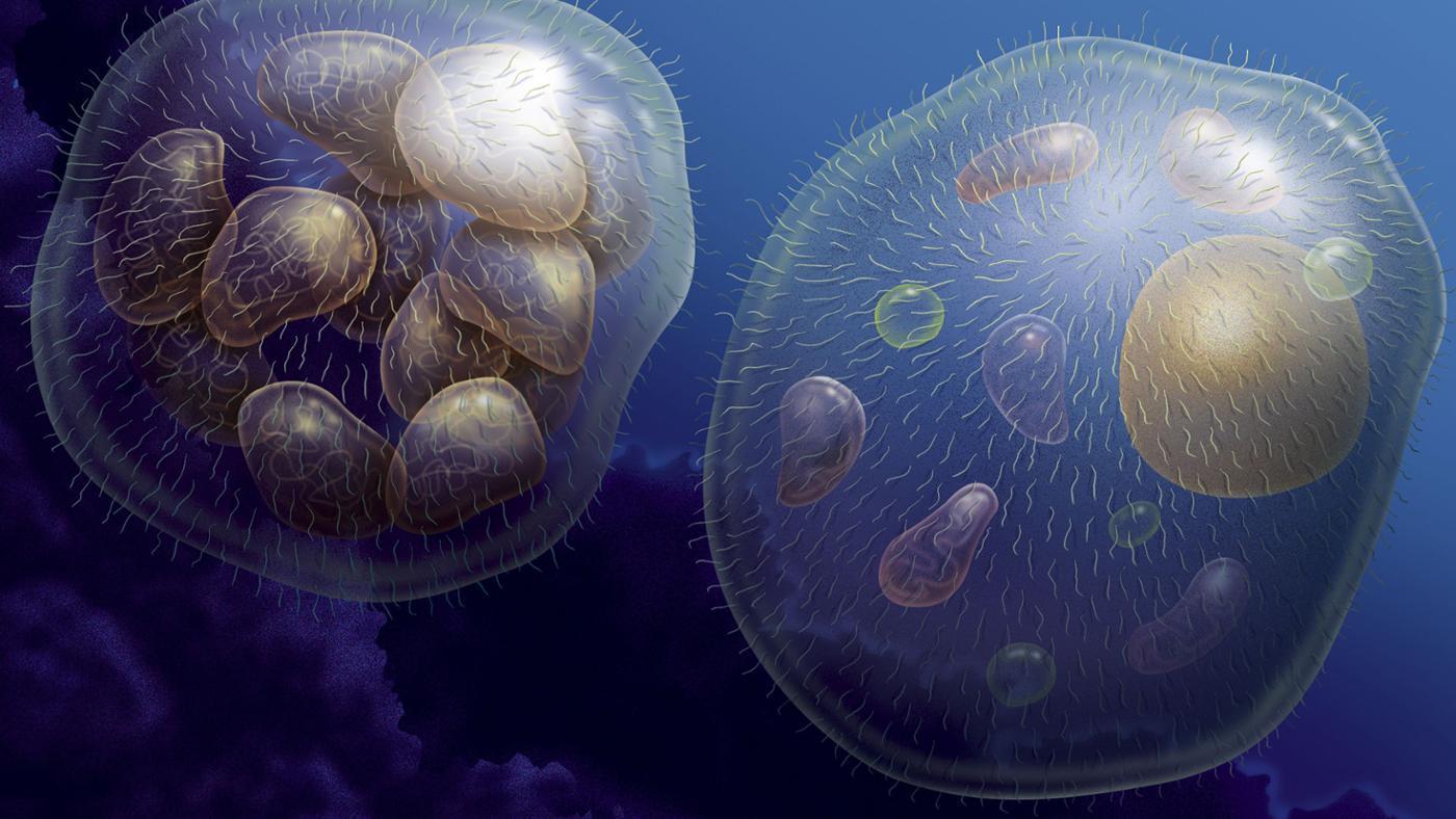 multicellular-organisms-grow