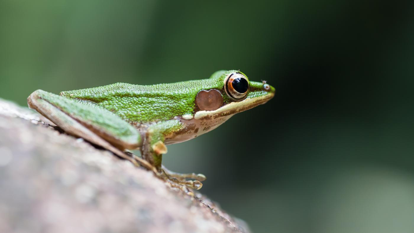 one-rid-tree-frogs
