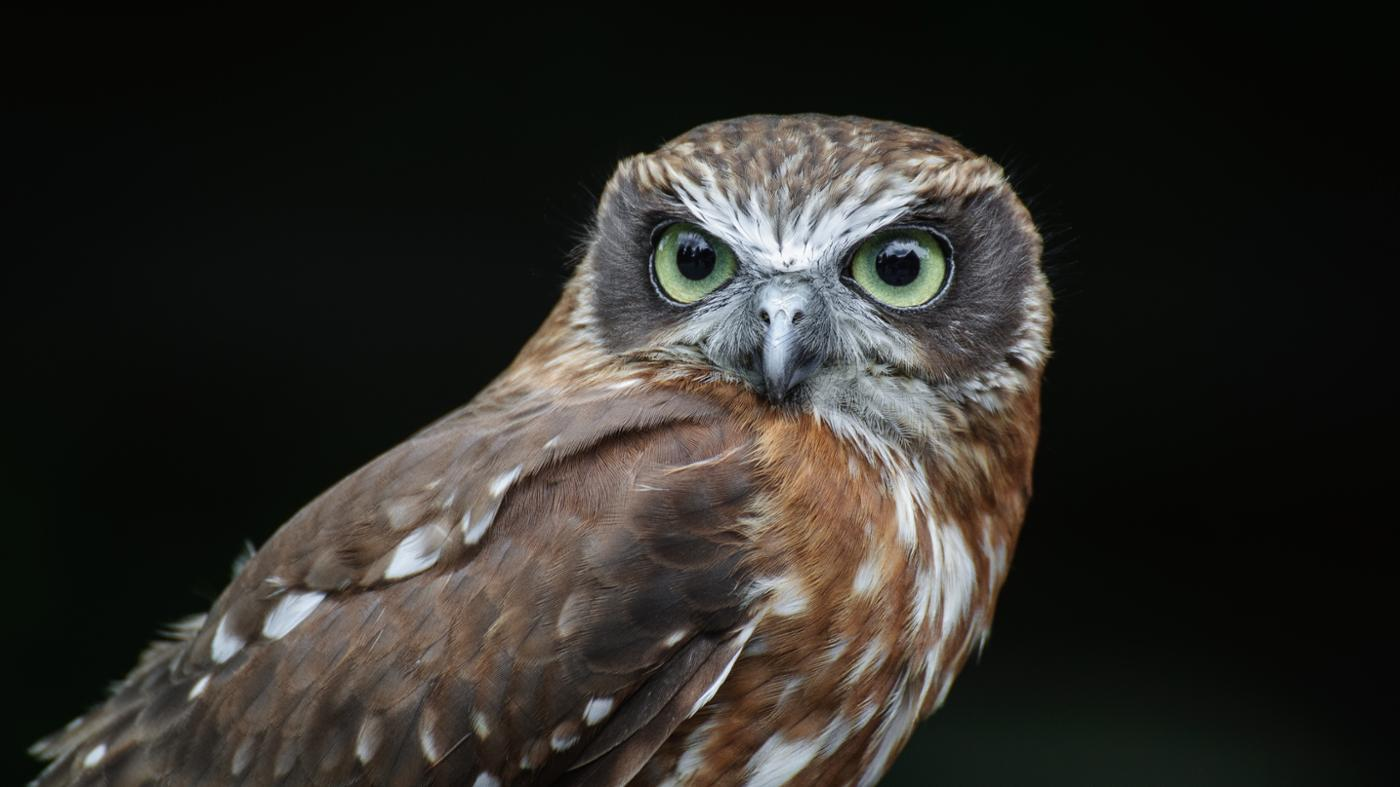 owls-hoot-night