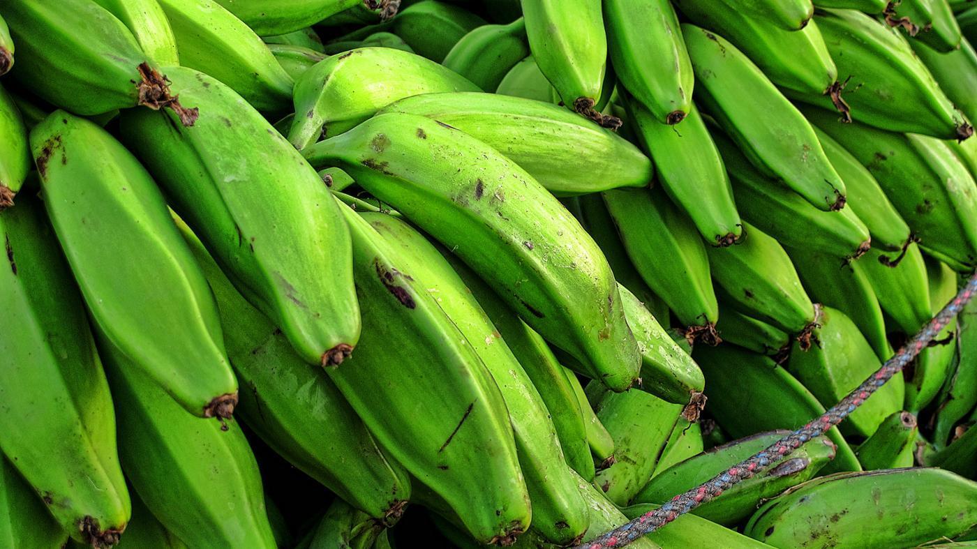 plantains-grow