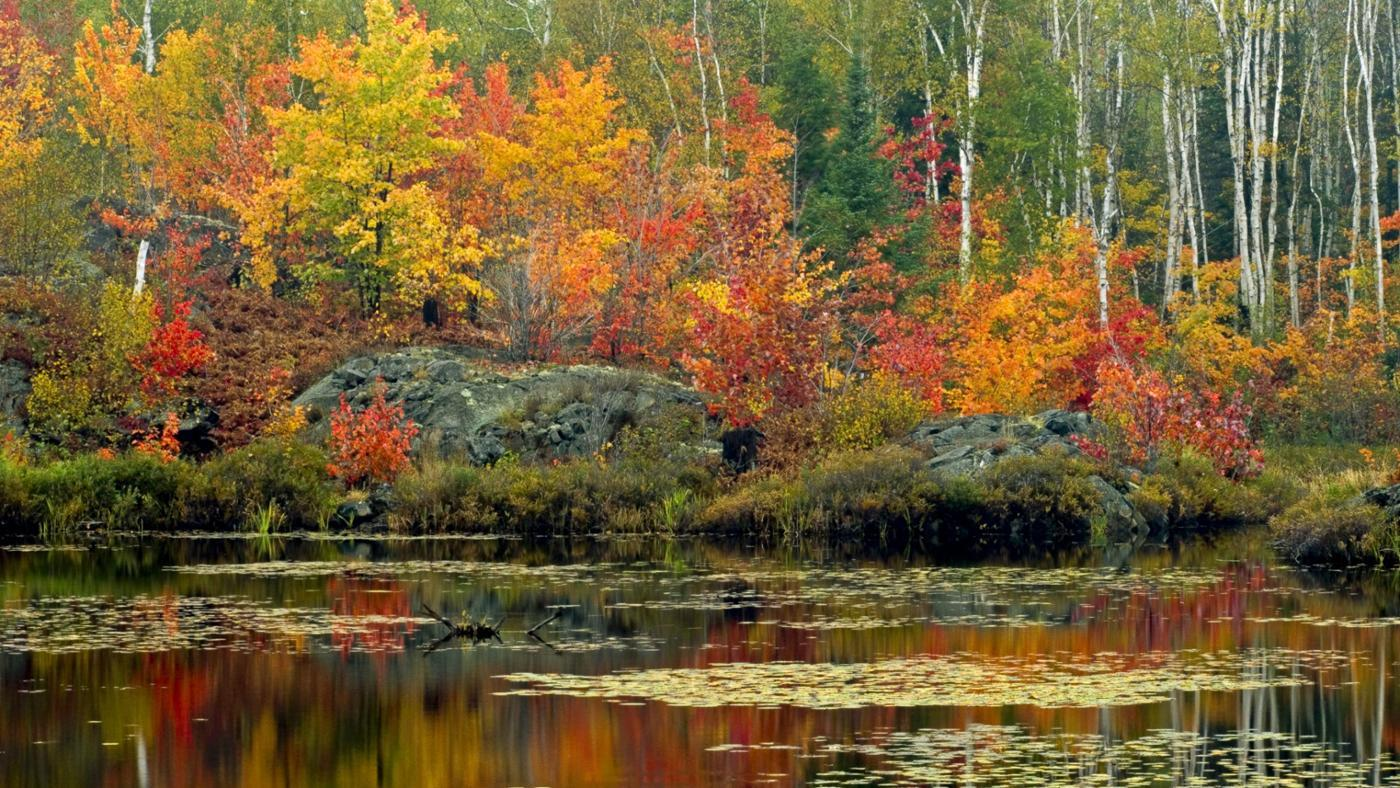 pond-ecosystem