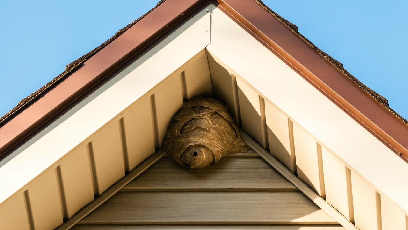 rid-wasps-walls
