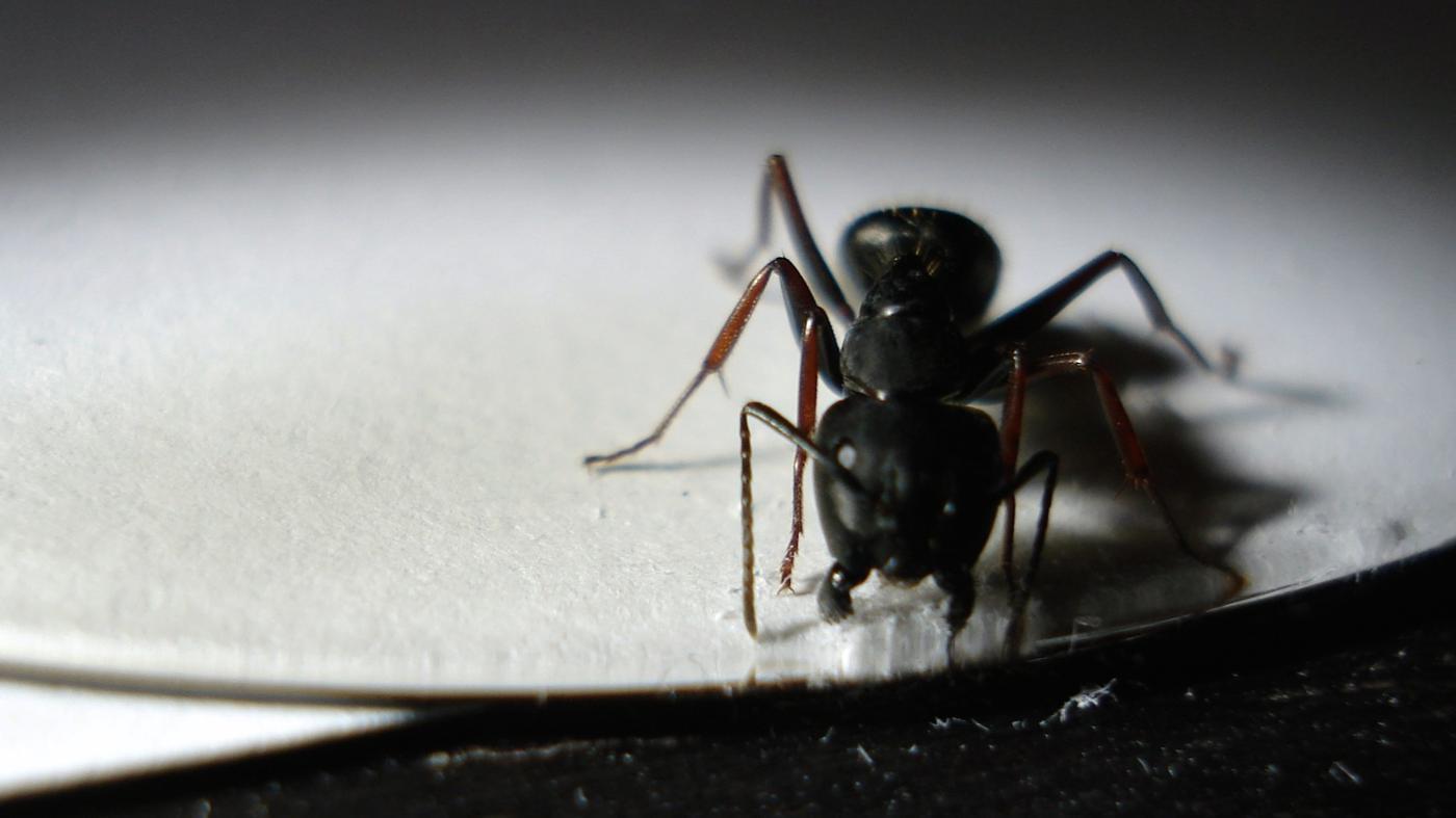 salt-kill-ants