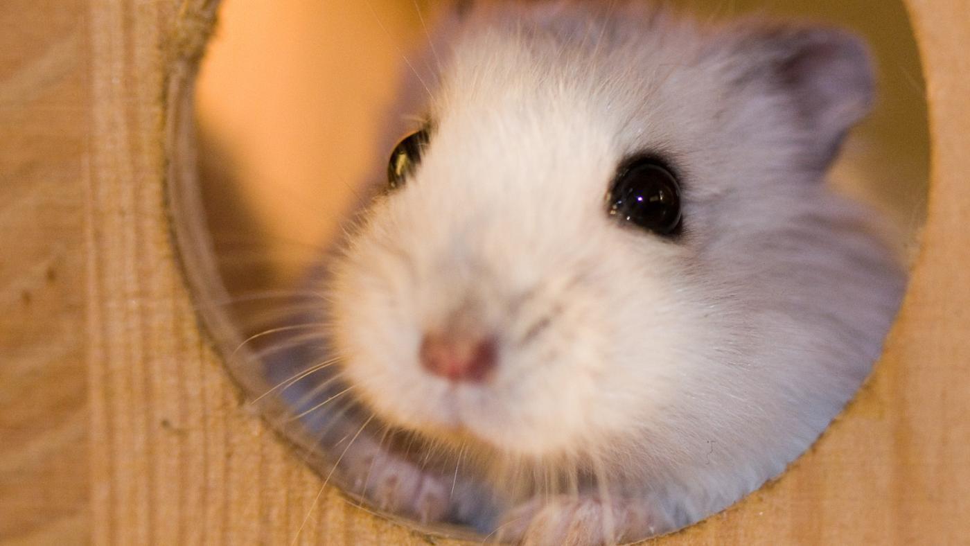 scent-repels-mice