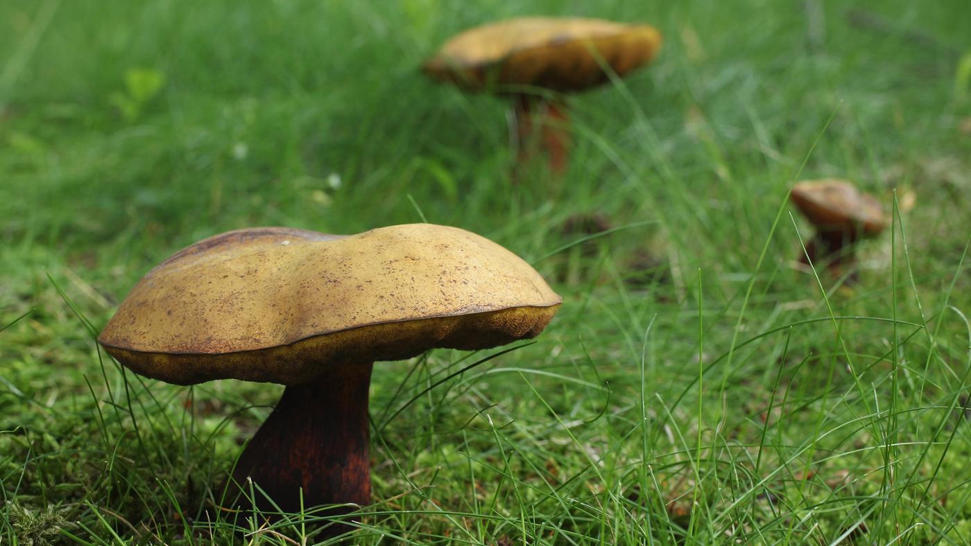 scientific-classification-mushrooms