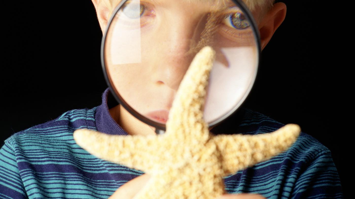 scientific-classification-starfish