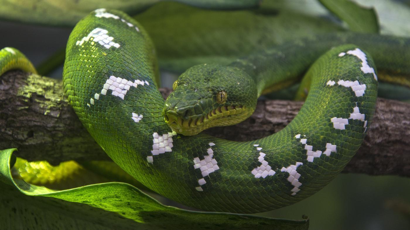 scientific-name-snake