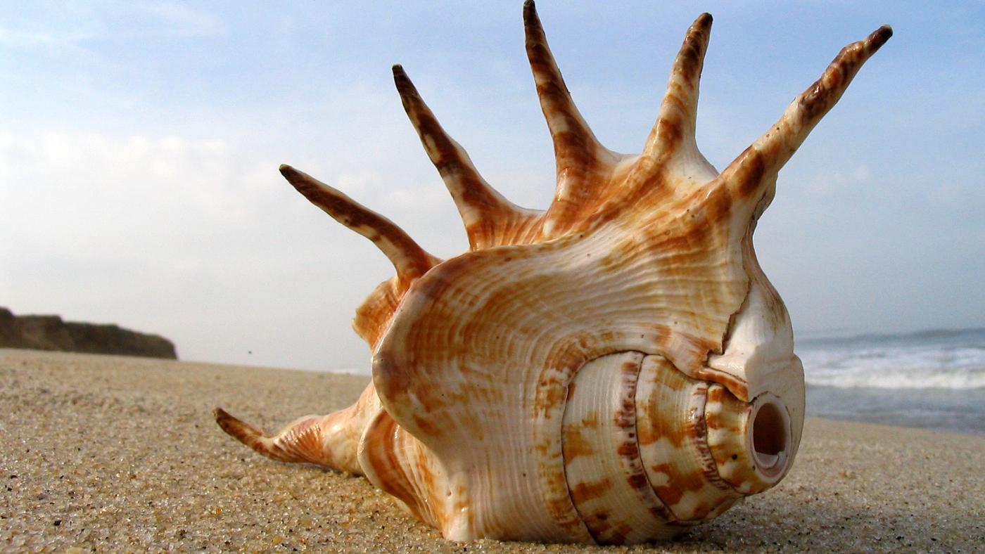 shells-made