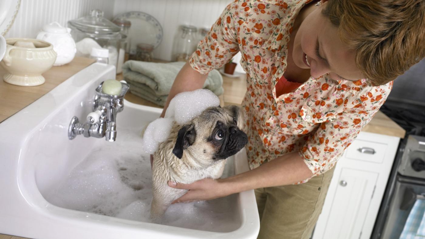 should-dog-ate-bar-soap