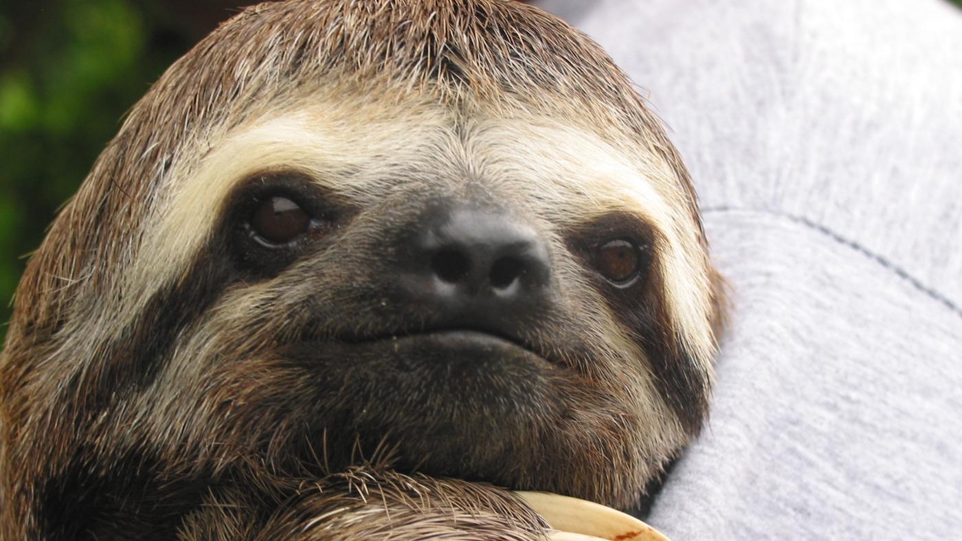 sloths-live