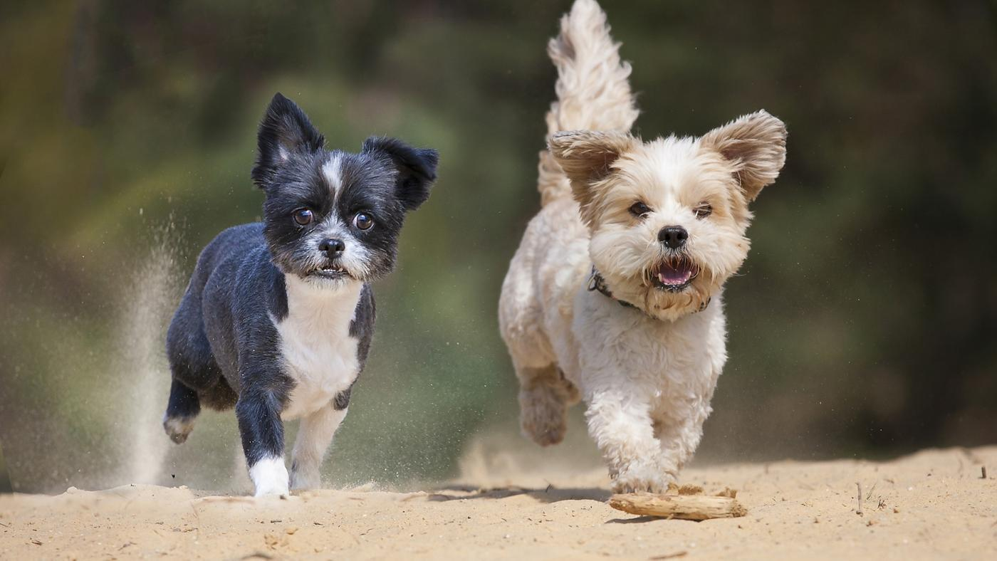 small-dog-breeds-weigh-under-5-pounds