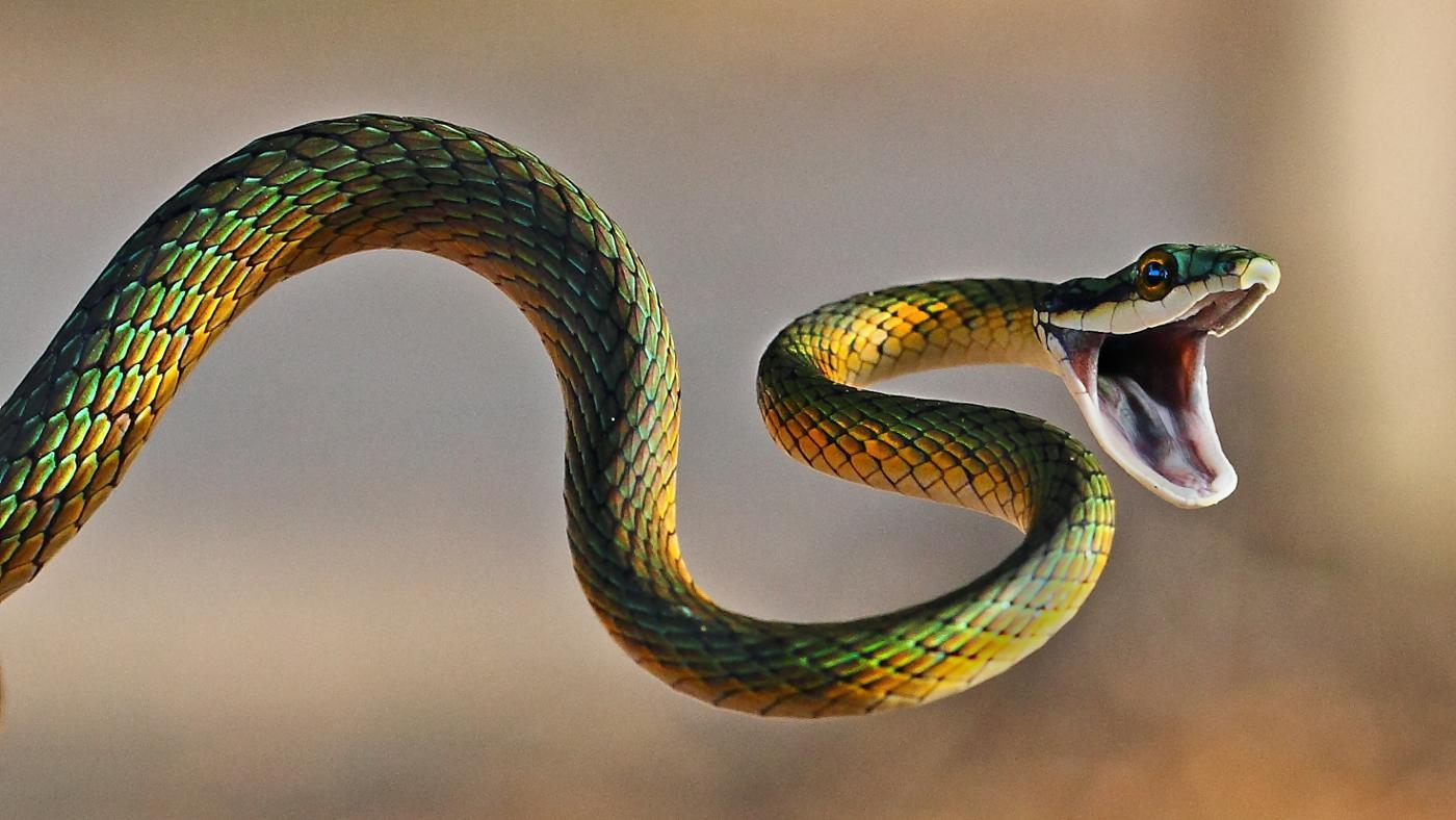 snake-bite-dream-mean