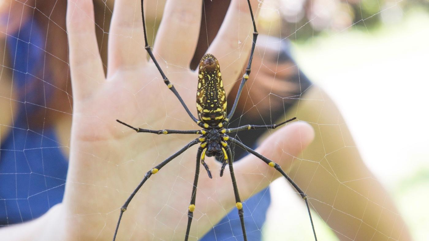 spider-bites-look-like