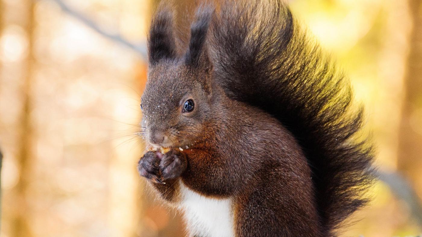 squirrels-eat-drink