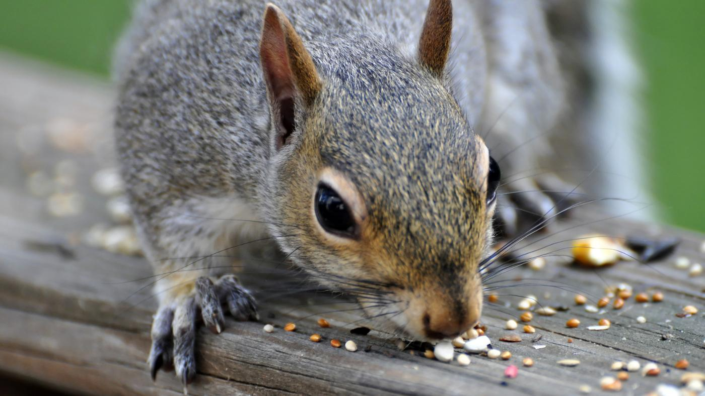 squirrels-like-eat